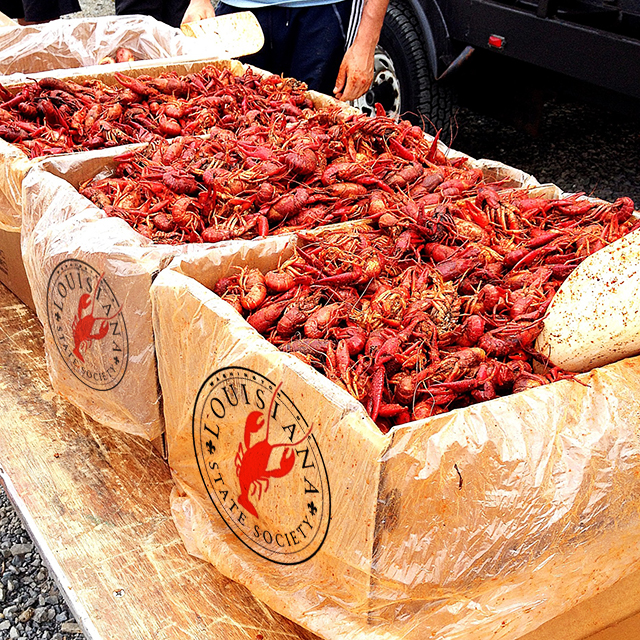 Buckets of crawfish for the outdoor seafood event Crawfest