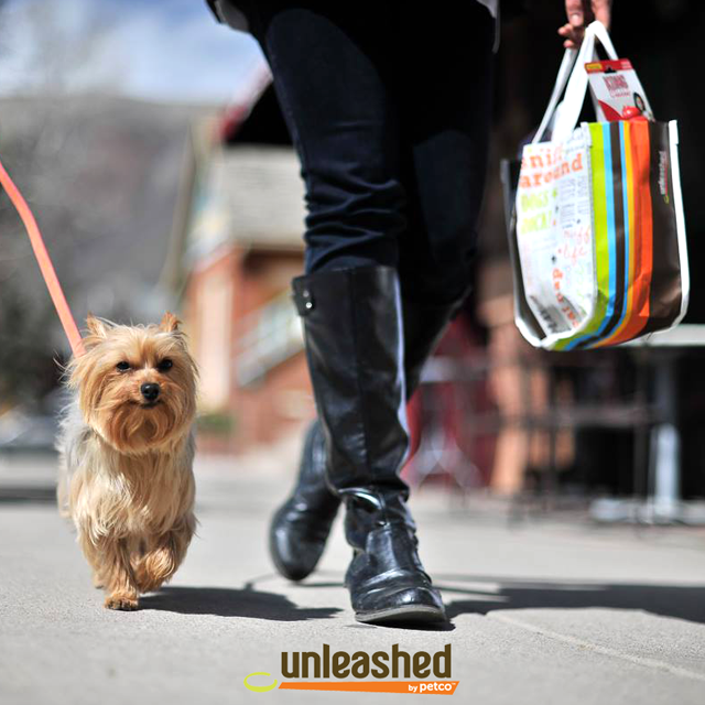 Person walking in boots with Yorkie dog