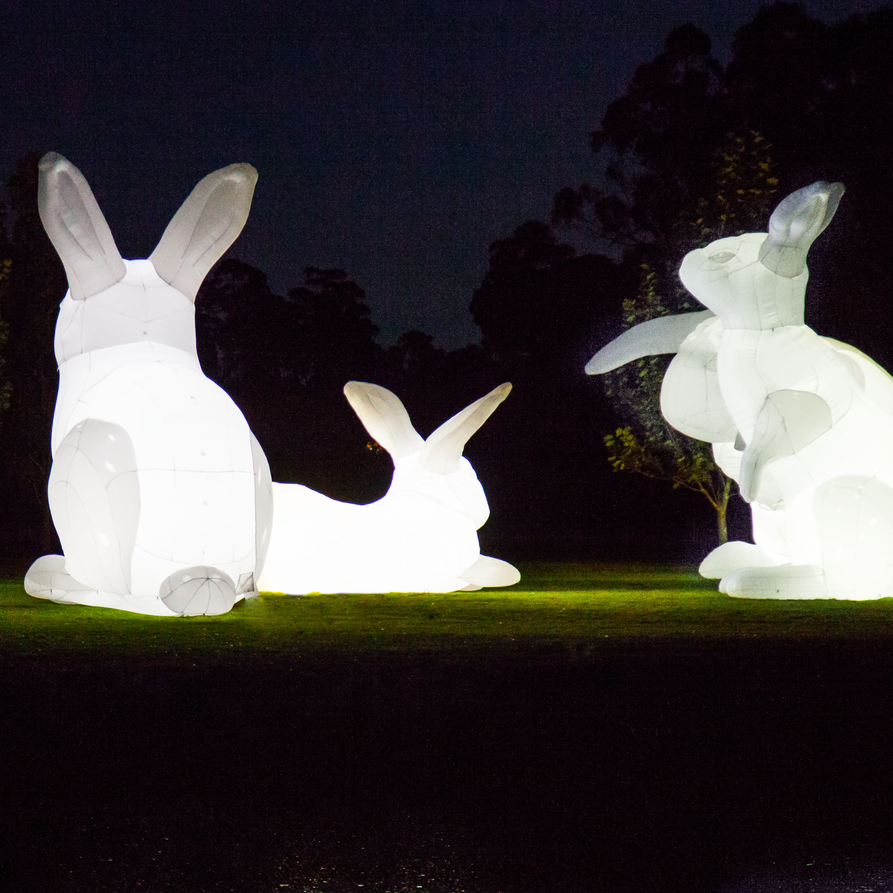 Large bunny sculptures lit up at night
