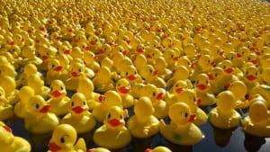 duck-race2