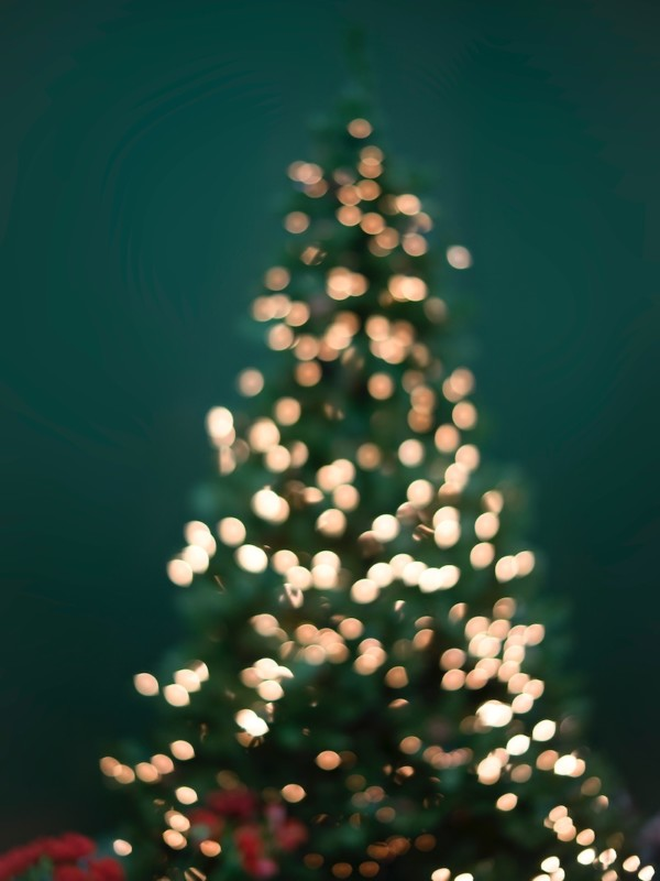 Christmas Tree with lights on green backdrop